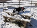Pepper Flying Over The Picnic Table