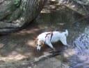 Wyatt in the creek